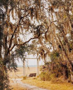 Live Oak Trees, Easy Like Sunday Morning, Southern Style, Coastal Living, Wonderful Places, South Carolina, Charleston, Real Life, Beautiful Pictures