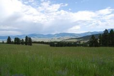 The Little Valley Ranch for sale near Avon, Montana. http://fayranches.com/ranches-for-sale/montana/little-valley-ranch-western-mt