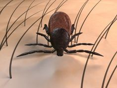 To Prevent Ticks: Wear light clothing Fill a small Spritz bottle with water, add 40 drops of Tea Tree Essential Oil, shake and spray on liberally. TO REMOVE TICK: Squirt a glob of liquid hand soap to a cotton ball, Cover the entire tick with the soaked cotton ball for a full 20 seconds. The tick will cease biting, back out and will remain stuck to the cotton ball when it's pulled away. If unsure how long its been biting you, once you pull off put in alcohol, can have tested, if need be.