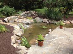 Pond renovation
