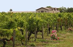 Château Haut Rozier Bordeaux, Vineyard, Bottles, Plants, Outdoor, Stone Driveway, Wine Vineyards, Environment, Outdoors
