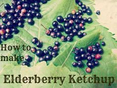 Wild Plant Forager - For those who are tired of elderberry syrup: elderberry ketchup! (Same recipe can be used with rose hips or rowan berries)