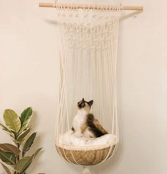 One of a kind handmade macrame cat bed. Black & white rope, coral or natural cot… ) ) One of a kind handmade macrame cat bed. Black & white rope, coral or natural cot…and pets hot calendar 2018 october malayalam, and pets zodiac movie trailer, pe Crazy Cat Lady, Crazy Cats, Cat Room, Macrame Design, Pet Furniture, Cheap Furniture, Discount Furniture, Diy Stuffed Animals, Fur Babies