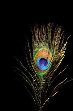 New Bird Quotes Love Feathers 32 Ideas Krishna Painting, Krishna Art, Krishna Images, Feather Wallpaper, Black Wallpaper, Nature Wallpaper, Lord Krishna Wallpapers, Radha Krishna Wallpaper, Peacock Colors