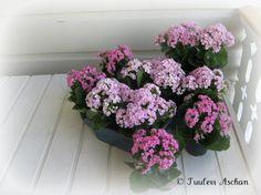 Flowers in cafe Kariranta, Lahti