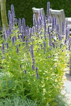 Pergola Kits Attached To House Amazing Gardens, Beautiful Gardens, Flower Garden Design, Flowers Garden, Lawn Edging, Contemporary Garden, Garden Signs, Garden Cottage, Colorful Garden