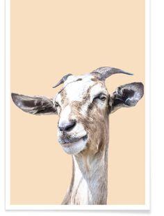 Goats, Cow, Moose Art, Google Shopping, Artwork, Poster, Stairs, Animals, Work Of Art