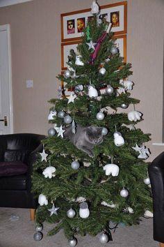 Cat & Christmas Tree