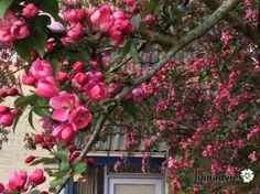 Een foto uit de tuin van Astrid haveman