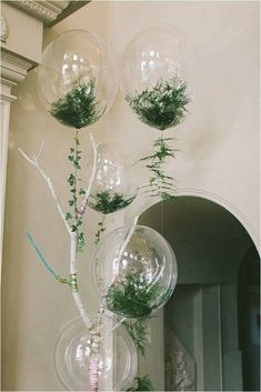 Plants in balloons