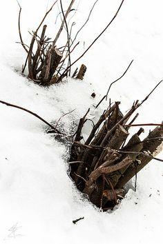 Iced Snowcap