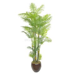 TCB-04 195CM Artificial Hawaii kwai Palm Small Palm Trees, Small Palms, Cactus Plants, Hawaii, Leaves, Cacti, Cactus, Hawaiian Islands