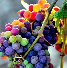 Лучшие фото. Гроздь винограда…