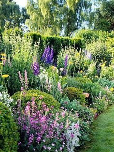 This once formal garden has been turned into a cottage garden by tucking flowers between the sculpted shrubs.
