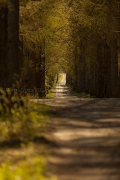 Springlike tunnel by Petri Forss
