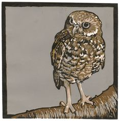 Burrowing Owl by Barbara Stikker. This is a reduction linocut. The image was created through the reduction process. In this process, a single linoleum plate is used for the entire image, and is carved (or reduced) in stages to create a multi-colored print. The first color, here a light beige, was printed using the whole plate, with a number of cuts to allow the white paper to show through. The plate was then cut and printed in the next color, a darker beige, to allow the lighter color to ...
