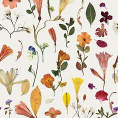 Wallpaper : Botanic Bloom White - Drop It Modern - Modern And Contemporary Interior Designed Wallpaper For The Studio And Home. Contemporary Interior Design, Modern House Design, Interior Design Kitchen, Design Bathroom, Paper Installation, How To Install Wallpaper, Modern Wallpaper, Luxury Kitchens, Luxury Home Decor