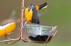 10 Things You Aren't Feeding Birds…Yet Don't limit your birds to seed, suet and sugar water. Keep 'em coming back for more by feeding birds the best buffet on the block.
