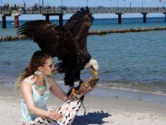 Die Erlebniswelt Fotografie Zingst – eine willkommene Weiterbildung | Weißkopfseeadler und Model am Strand von Zingst (c) Frank Koebsch (1)