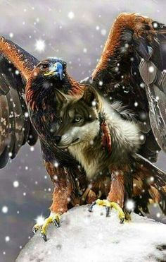 Eagle Images, Eagle Pictures, Wolf Images, Wolf Pictures, Native American Pictures, Native American Artwork, American Indian Art, Beautiful Wolves, Beautiful Birds