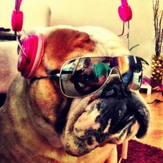 "Bulldog with headphones and sunglasses / ""Jammin' time"""