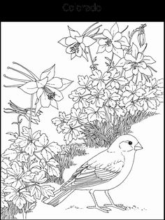 This site has some great coloring pages for each state. I especially love the ones with the state flower and state bird. These would make for some great letter writing topics with your sponsored child.