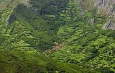 Asturias Parque Natural de Redes