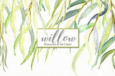 Willow branches watercolor by LABFcreations on @creativemarket