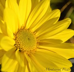 Montserrat Picas - Google+
