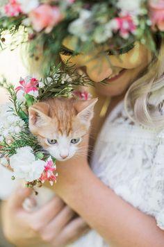 Orange And White Cat, Tadashi Shoji Dresses, Cat Wedding, Cat Flowers, Mama Cat, Bridal Shoot, Bridal Portraits, Flower Dresses, Kittens Cutest
