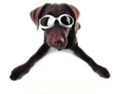 Doggles ILS XL Chrome Frame and Smoke Lens - http://www.thepuppy.org/doggles-ils-xl-chrome-frame-and-smoke-lens/