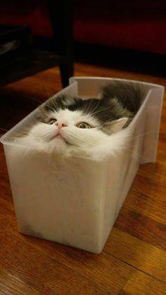 Haaaaa iced cube cat