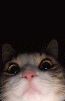 Funny Cat Wallpaper, Animal Wallpaper, Cute Cartoon Wallpapers, Iphone Wallpaper Cat, Homescreen Wallpaper, Trendy Wallpaper, Photo Wallpaper, Wallpaper Backgrounds, Baby Animals Pictures