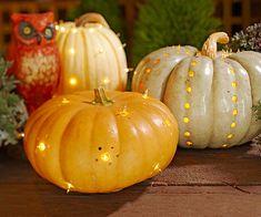 Light Bright Pumpkins