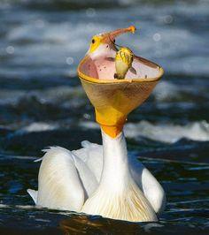 Cet oiseau marin en train de pêcher