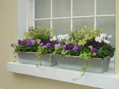 Pretty, Colourful Window box                                                                                                                                                                                 More