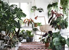This Is the Most Underrated Section of IKEA, According to Designers Large Plants, Cool Plants, Green Plants, Tropical Plants, Inside Plants, Calathea, Ikea Plants, Indoor Plants, Pot Plante
