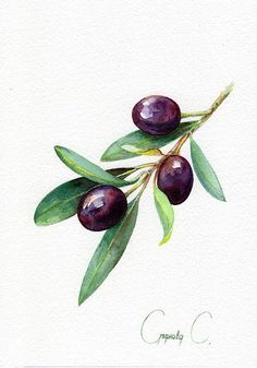 Olive berries yellow blue green Watercolor Original Painting from the Artist Art and Collectibles Drawing botanical Illustration Art Artist berries Blue botanical Collectibles Drawing Green Illustration olive Original Painting Watercolor yellow # Watercolor Fruit, Watercolor Flowers, Watercolor Paintings, Painting Flowers, Watercolour, Painting Trees, Simple Watercolor, Blue Painting, Watercolor Artists