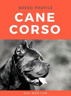 Cane Corso growth chart Pets Cane corso, Dogs, Cane
