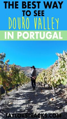Heading to Portugal? You can't miss Douro Valley. If you're a wine lover or not you need to see this stunning area. #portugal #europe ******************************** Douro Valley wine tasting | Douro Valley tour | Douro Valley Portugal | Portugal travel | Portugal Porto | Porto day trips | Things to do in Portugal | Things to do in Porto | Europe travel | Europe destinations | Portugal travel | Portugal destinations