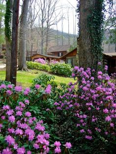Asheville Cabins of Willow Winds, North Carolina.  Mountain cabin rentals.   Go to www.YourTravelVideos.com or just click on photo for home videos and much more on sites like this.