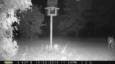 Someone new on The Farm! Nice Buck! www.laurenboehmlynch.com The Broken Road Farm!