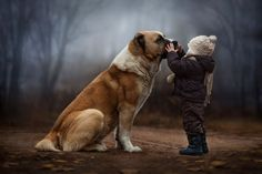 Große Liebe, der Familienhund © Elena Shumilova
