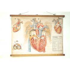 """Biologiekaart """" Het menselijk hart"""""""