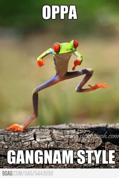 Oppa Froggy Gangnam Style - Bottled by Laugh Out Loud Funny Animal Quotes, Funny Animals, Cute Animals, Animal Sayings, Funniest Animals, Animal Humor, Funny Sayings, Animal Memes, Funny Shit