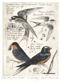 Birds. Nature, journal, sketchbook, notebook, dairy, words and images, drawing.
