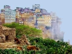 Socotra Island, Yemen. Socotra is a small archipelago of four islands in the Indian Ocean. The largest island, also called Socotra, is about 95% of the landmass of the archipelago. The island is very isolated and through the process of speciation, a third of its plant life is found nowhere else on the planet. It has been described as the most alien-looking place on Earth.