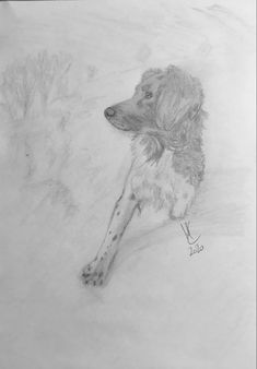 Siska in the snow 2020 - Pencil drawing / sketch Animal Sketches, Drawing Sketches, Pencil Drawings, Moose Art, Snow, Dogs, Cats, Sketches Of Animals, Animal Drawings