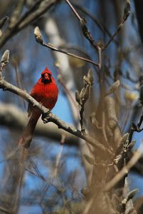 red by Tim Hauser -  Click on the image to enlarge.