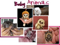 """Baby Animals:)"" by kourt143 ❤ liked on Polyvore"
